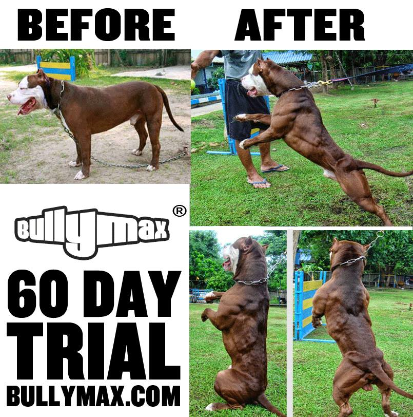 Bully Max Premium Muscle Building Dog Supplements