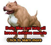 bodybuilding for dogs