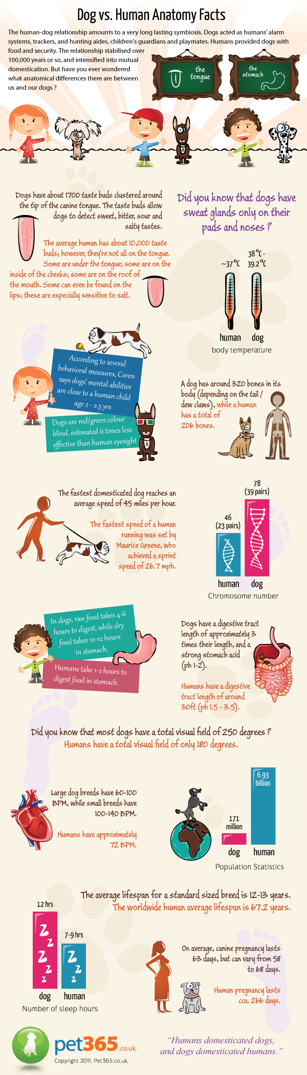 dog-anatomy-infographic