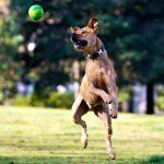 dog-jumping-for-ball