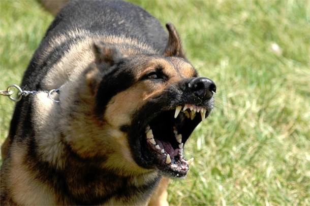 Getting professional help from a qualified expert is a good way to go when you feel that your dog is out of your control. Dog aggression towards people and other dogs should not be acceptable behavior for your dogs.