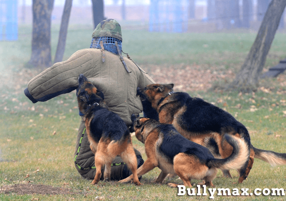 german-shepherd-police-dogs