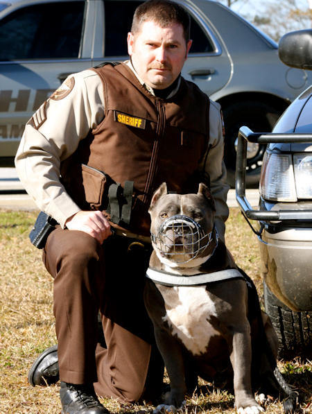 pitbull-harness-dog-harness