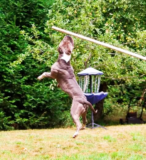 Workout Exercises for Dogs