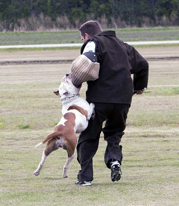 Protection Dogs for Families - The five best guard dogs to ...