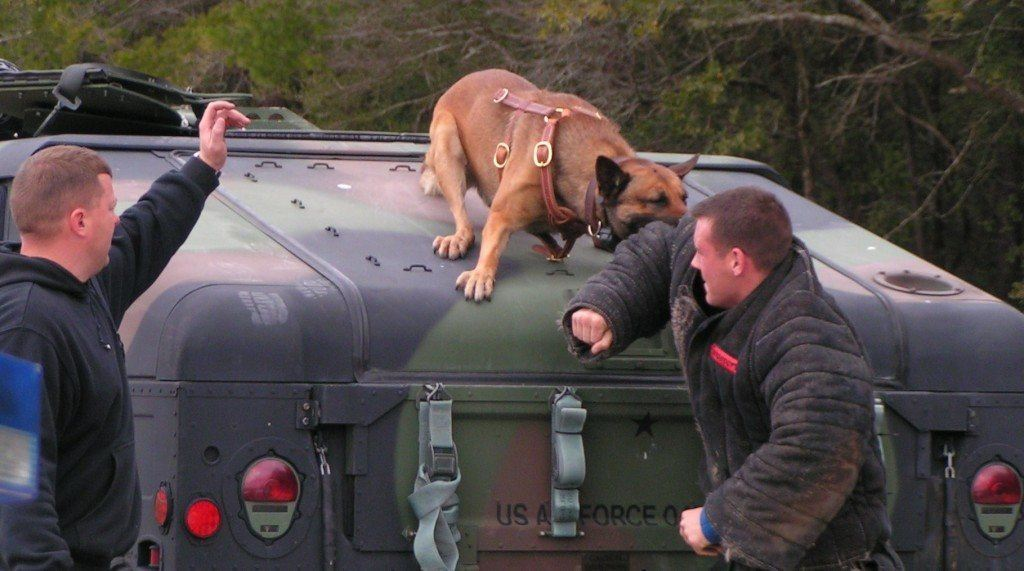 Police and army dog training