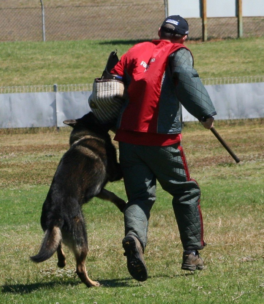 German Shepherd Best Protection Dogs to own for families