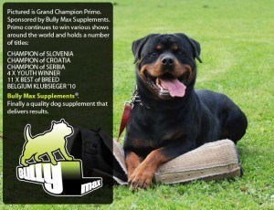 Dog supplements for weight gain
