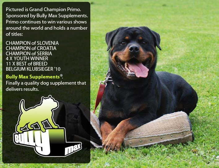 Rottweiler dog supplements