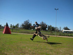 schutzhund-dog-training