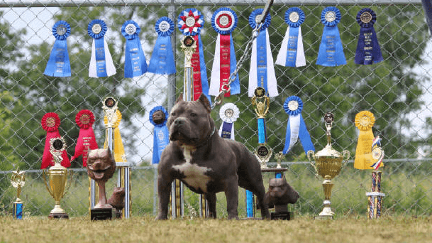 Draft Day Picking a Show Dog
