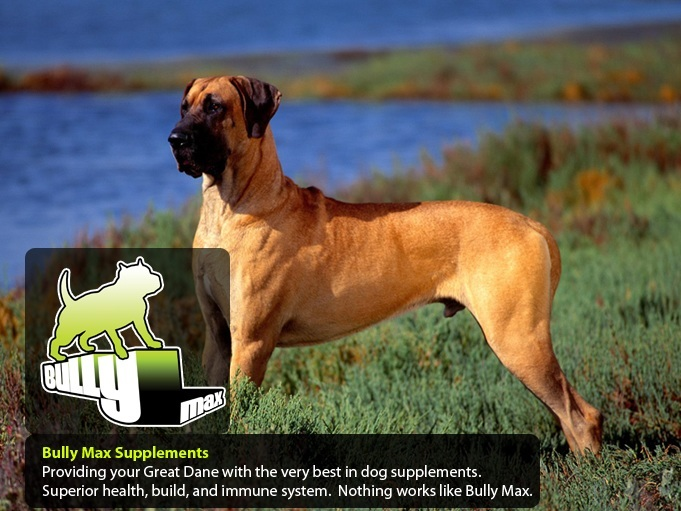 Great Dane dog vitamins