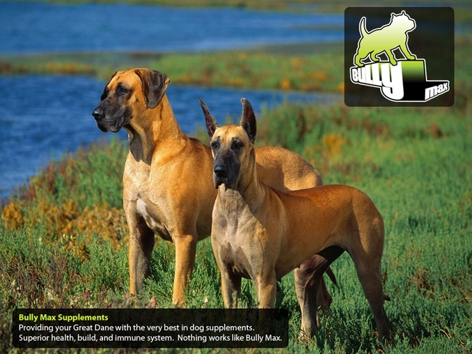 vitamins for great danes