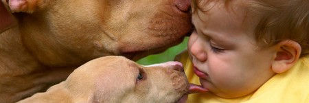 pit bull with kids