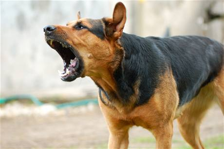 Stop Dog Barking A How To Guide