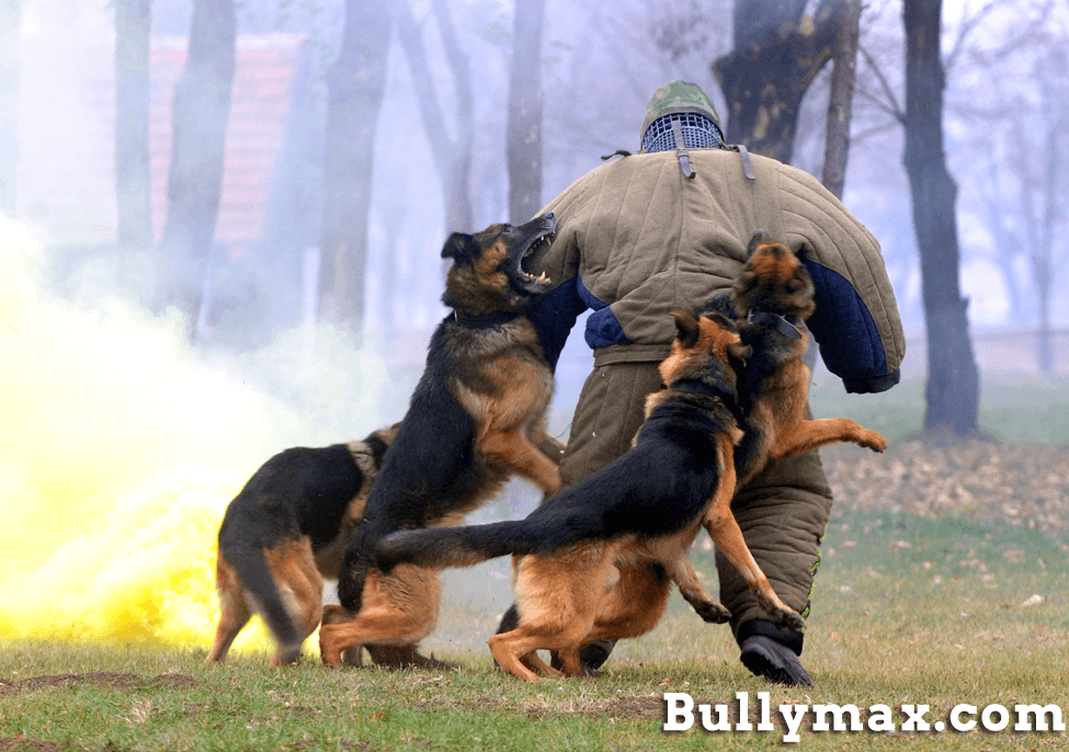 attack dog training
