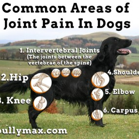 Common Areas Of Joint Pain In Dogs