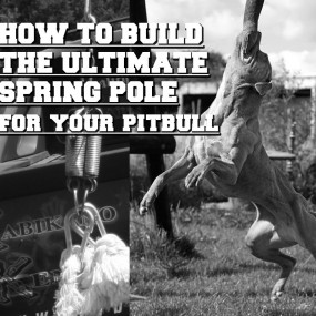How to Build the Ultimate Spring Pole for your Pit Bulls
