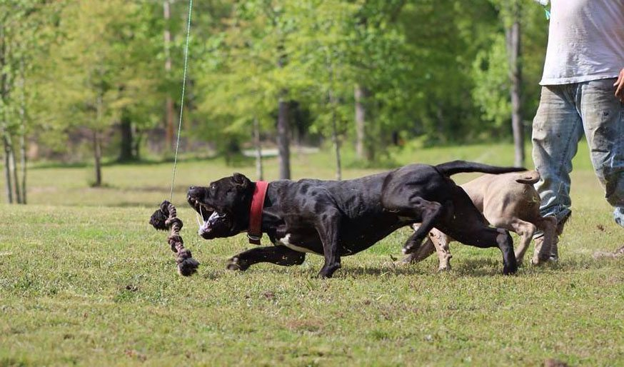 Top 4 Muscle Building Exercises for Dogs