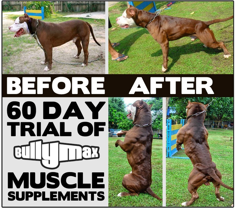 Best In Show Supplement For Dogs