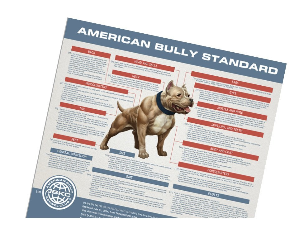The American Bully Standards & Terminology of Structure