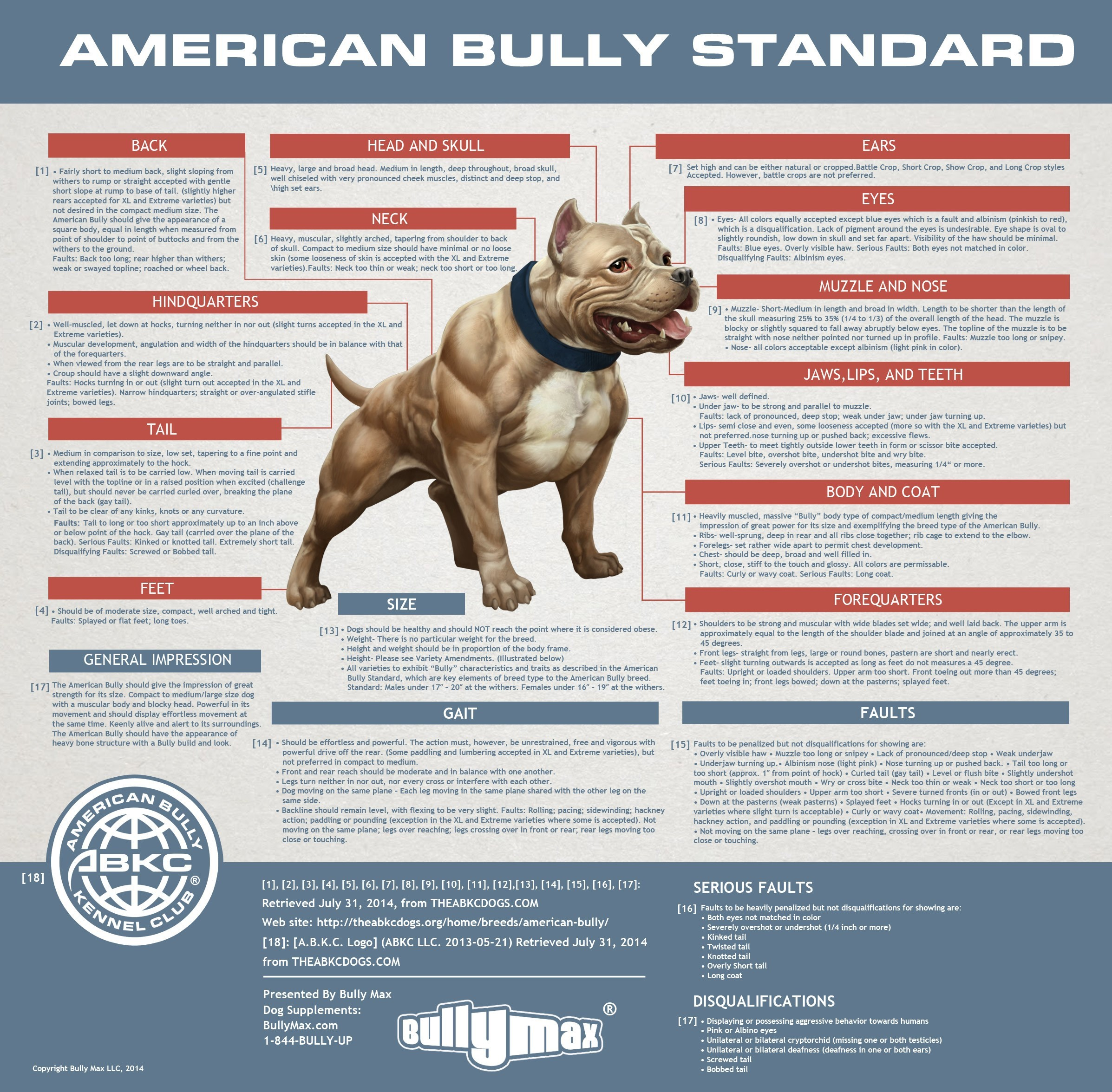 standard american bully. Black Bedroom Furniture Sets. Home Design Ideas