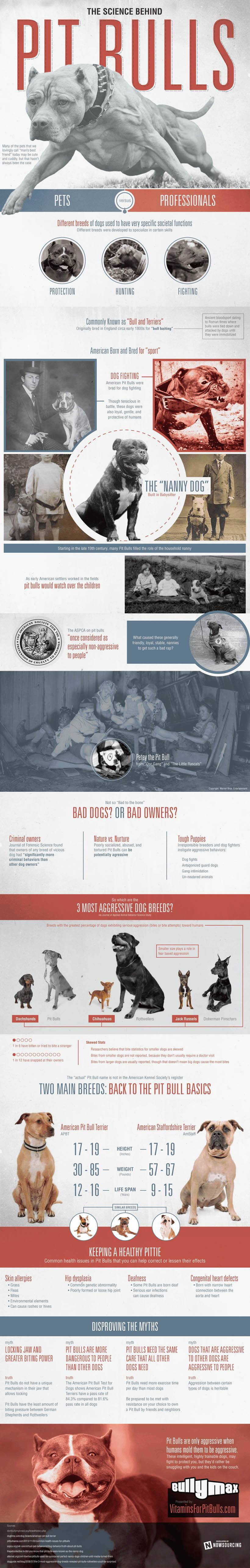 The Science Behind Pit Bulls – An infographic by Nowsourcing.com