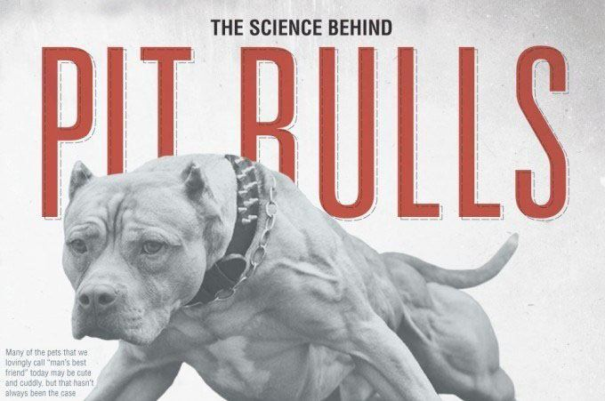 The Science Behind Pit Bulls - An infographic by Nowsourcing.com