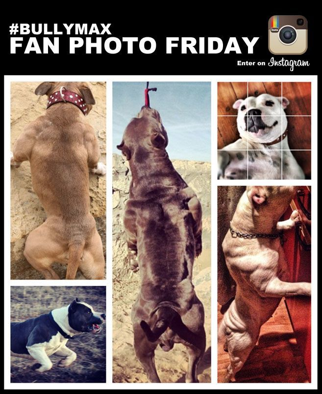 bullymax-fan-photo-friday-results