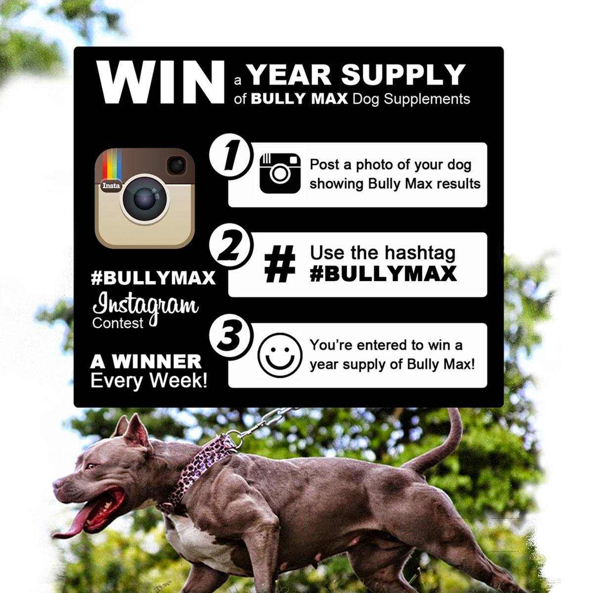 WIN a Year Supply Of Bully Max