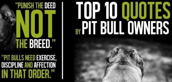 Famous Quotes About Pit Bulls Bully Max: Dog ...