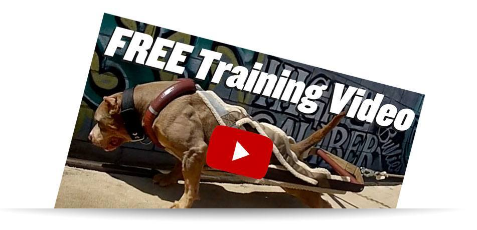 Weight Pulling Tutorial Video for Beginners