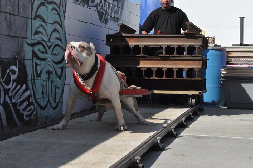 Featured Bully Max Sponsored Videos