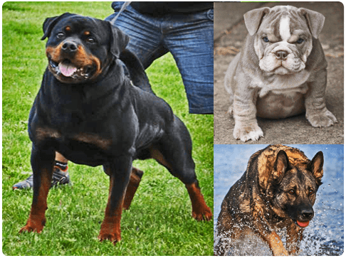 Dog Muscle Building Supplements In South Africa